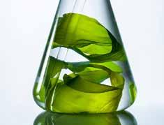 Seaweed in bottle